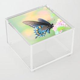 Spicebush Swallowtail Butterfly on Lantana Acrylic Box