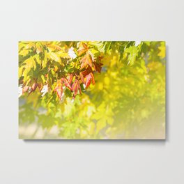 Colored autumn leaves background Metal Print