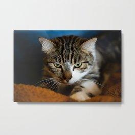 hunting feline Metal Print