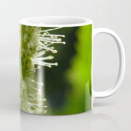 Macro shot of a chestnut blossom Coffee Mug