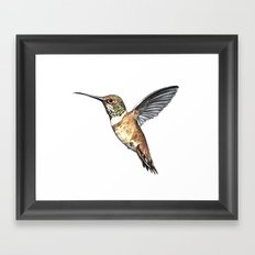 flying hummingbird watercolor sketch Framed Art Print