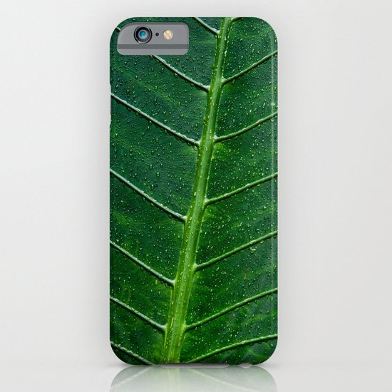 Giant Upright Elephant Ear, Night-scented Lily (Alocasia Odora) iPhone & iPod Case