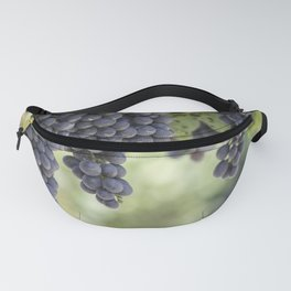 black grape grows on vineyard Fanny Pack