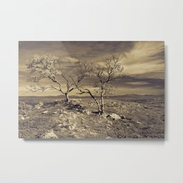 Loney trees Metal Print