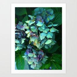 Treasure of Nature VII Art Print