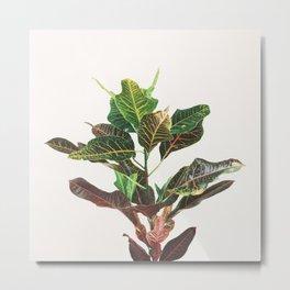 Croton Metal Print