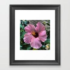 Raindrops on pink flower Framed Art Print