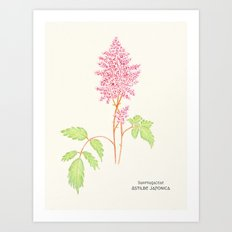 Botanical Sketches 4: False Spirea Art Print