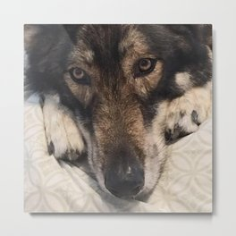 Dog German Shepherd Metal Print