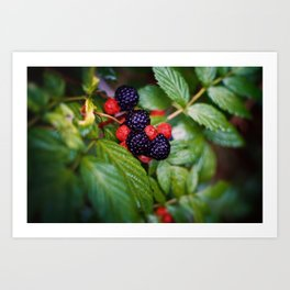 BLACK RASPBERRY Art Print