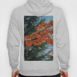 Autumn 04 Hoody