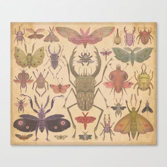 Entomologist's Wish Canvas Print