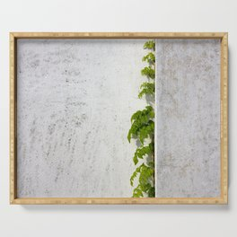 Wisteria climbing plastered wall Serving Tray