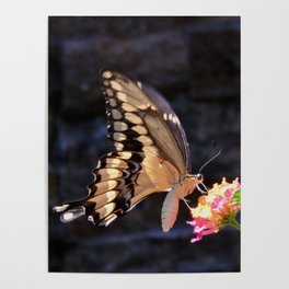 Swallowtail Overexposed Poster