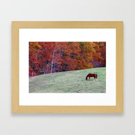 Fall Horse Framed Art Print