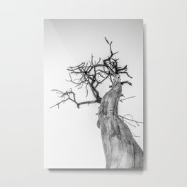 The Tree of Light Metal Print