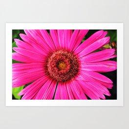 daisy daisy. Art Print