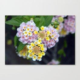 Tropical Plant Lantana Camara or West Indian Lantana Canvas Print