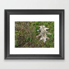 Oak Leaf Framed Art Print