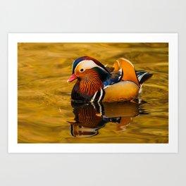 Bird - Mandarin Duck Art Print
