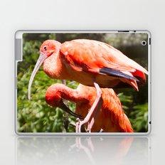 Eudocimus Ruber Laptop & iPad Skin