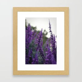 Long Purple Flowers Framed Art Print