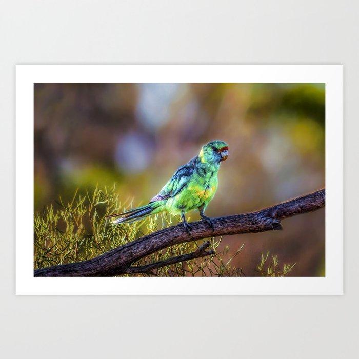 Mallee Ringneck Parrot Art Print