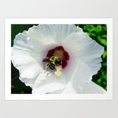 Bee at work Art Print