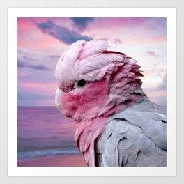 Pink Galah Cockatoo Art Print