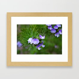 Purple Poppies Framed Art Print