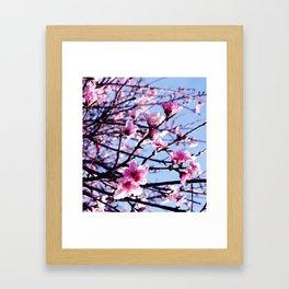 A Promise Of Spring Framed Art Print