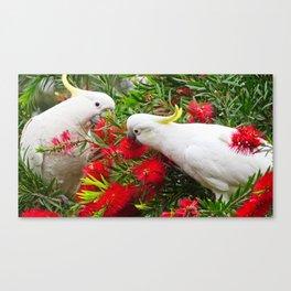 Sulphur Crested Cockatoos Canvas Print