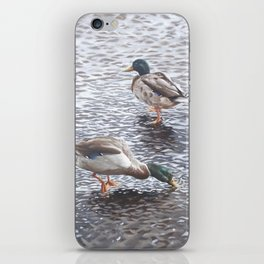 two mallard ducks standing in water iPhone Skin