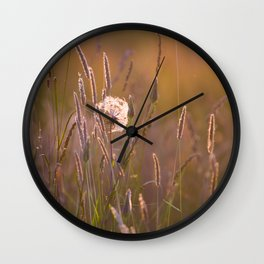 Arnica medicinal plant in a summer meadow Wall Clock