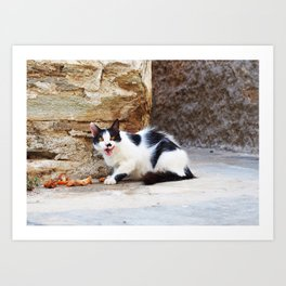 Hungry Greek cat Art Print