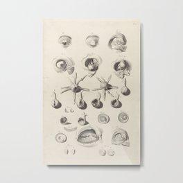 Anatomical Study of the Eye, 1685 Metal Print