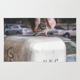 NYC Pigeon Rug