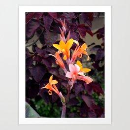 Flower Pic 2 Art Print