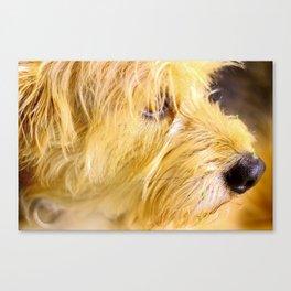 Doggy Canvas Print