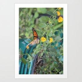 Monarch on Lantana flower Art Print