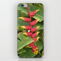 "indonesia iPhone & iPod Skins featuring Flower ""Heliconia"" (Bali, Indonesia) by Christian Haberäcker - acryl abstract"