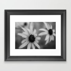 Black eyed susan 01 Framed Art Print