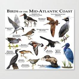 Birds of the Mid-Atlantic Coast Canvas Print
