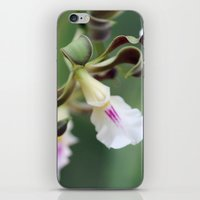 monkey island iPhone & iPod Skins featuring Monkey Orchide by BACK to THE ROOTS