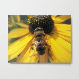 A Bee's Life Metal Print