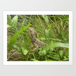 LOST IN THE GRASS Art Print
