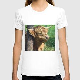 Galloway beef T-shirt