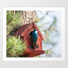 Blue Swallow Photography Print Art Print