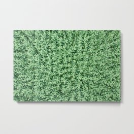 Nature print, Green rapeseed agriculture field Top View. Rapeseed. Metal Print