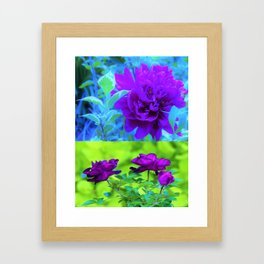 Purple Peony and Roses Garden Collage 002 Framed Art Print